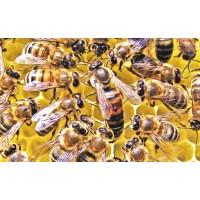 Спаривание пчелиных маток