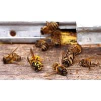 Причины отравления пчел