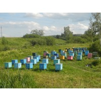 Кочевая пасека: перевозка пчел для опыления полей культурных медоносов